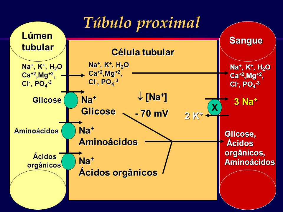 Túbulo proximal Lúmen Sangue tubular Célula tubular  [Na+] Na+ 3 Na+